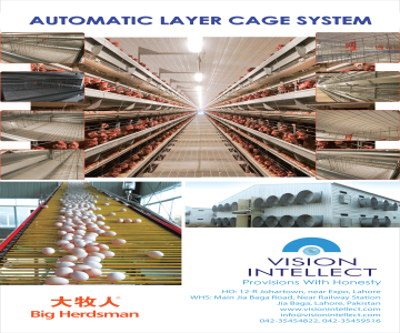 Layer Cage System